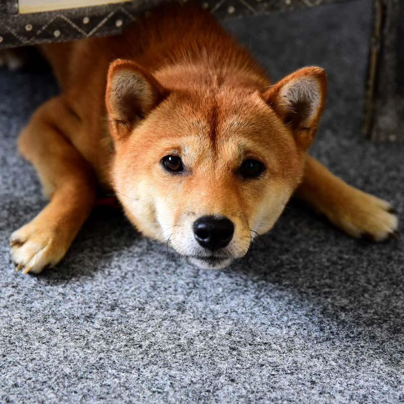 Coaching_Hund